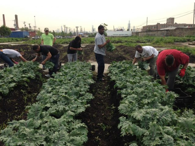 Since 2013, 83 percent of the participants in Chicago FarmWorks' transitional job training program have found long-term employment.